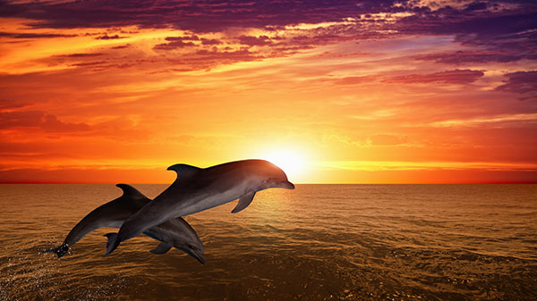Hilton Head Dolphin Tours Package