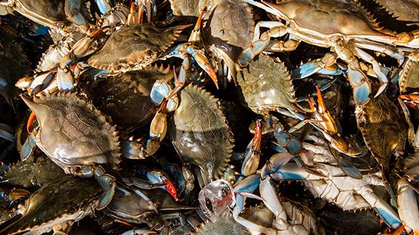 Hilton Head Crabbing Package